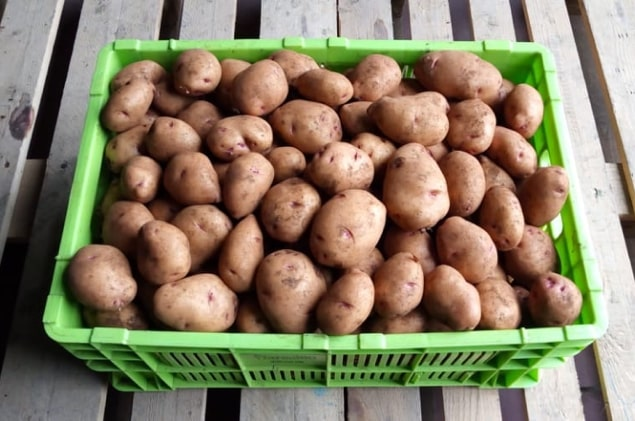 A Grade fresh potato from local farms. Sorted and graded for you. Size range 35-60mm. Variety: Shangi