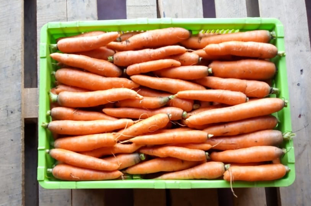 Carrots are available in plentiful supply, fresh from local farmers. Quality controlled and delivered to you