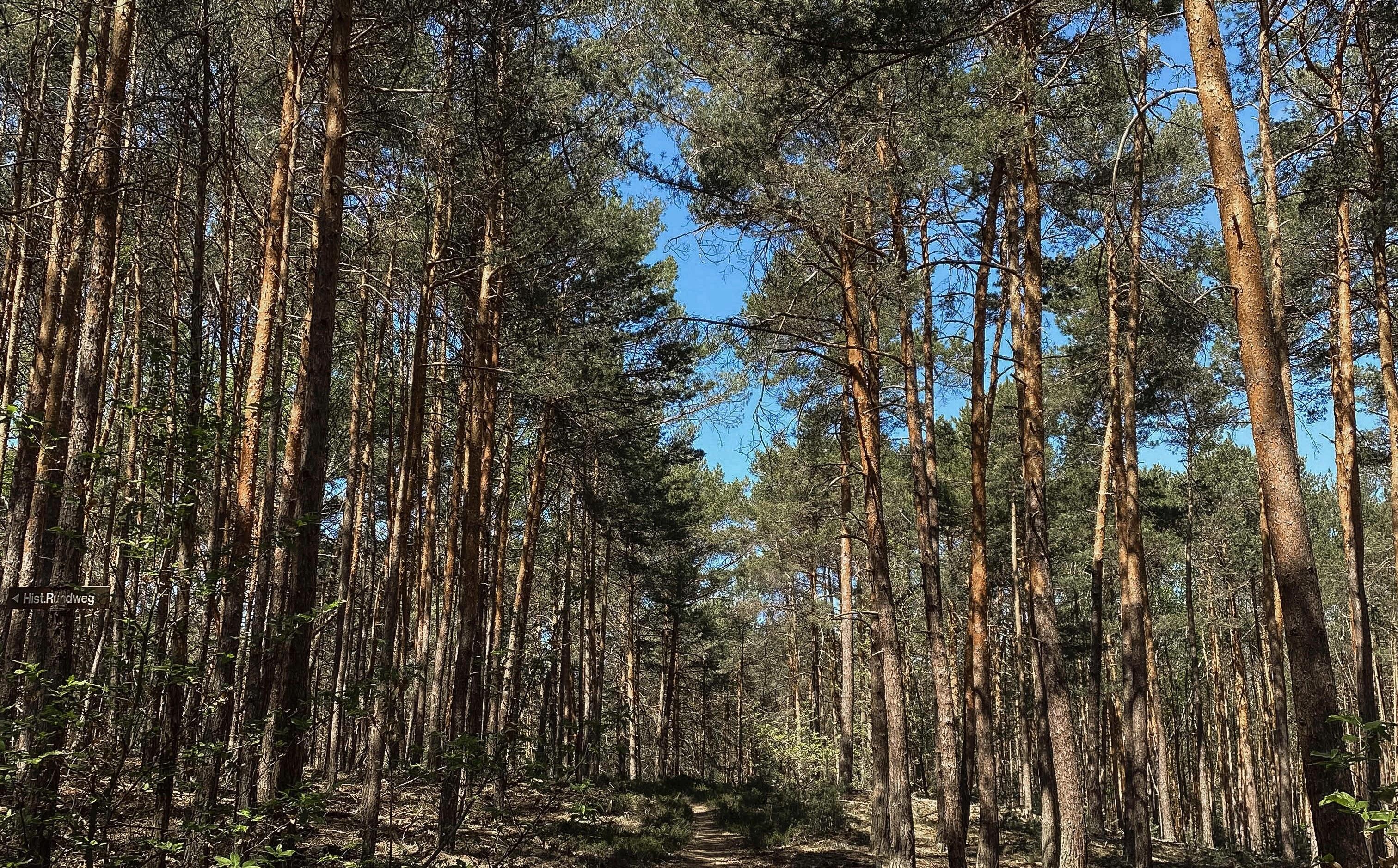 Die Preise für Baumaterial, vor allem Holz, explodieren geradezu. Die erhöhte Nachfrage auf dem Weltmarkt ist dabei nur einer der Preistreiber.