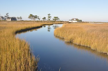 Image of North Carolina Coastal habitat