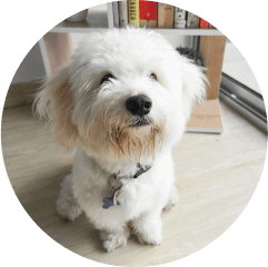 Admios' resident pup