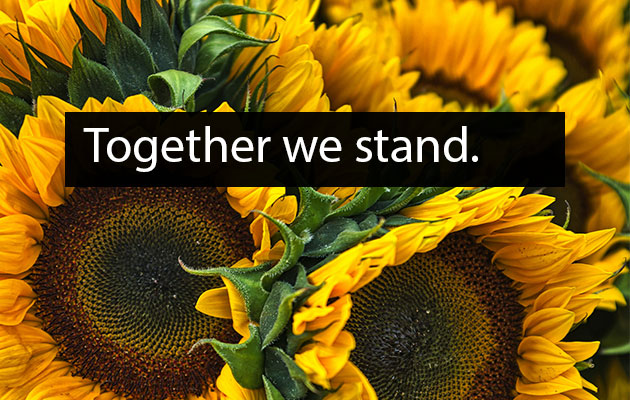 """photograph of sunflowers with overlaid text that reads """"Together we stand."""""""
