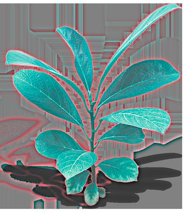planta crecimiento blog digital gen zero