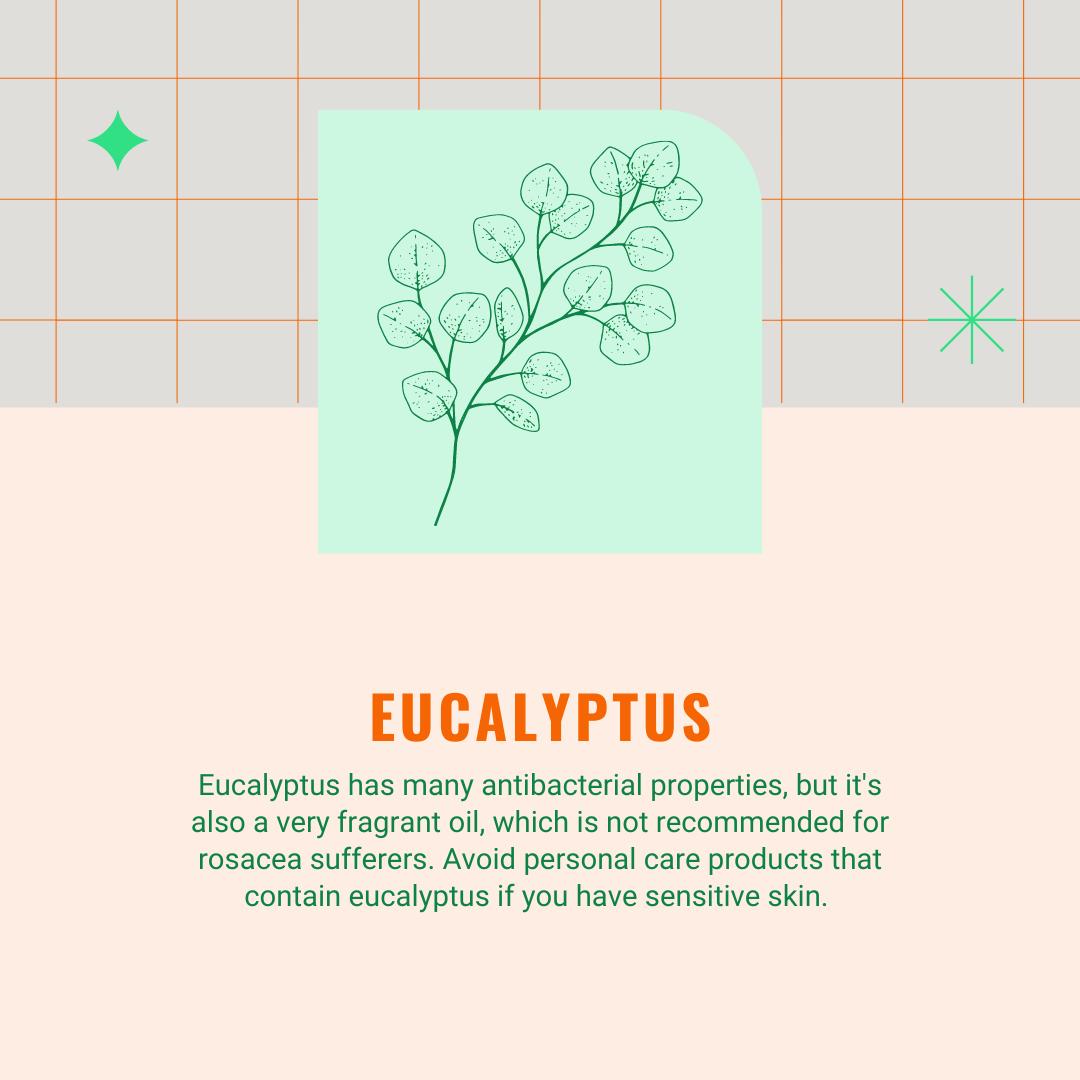 eucalyptus infographic