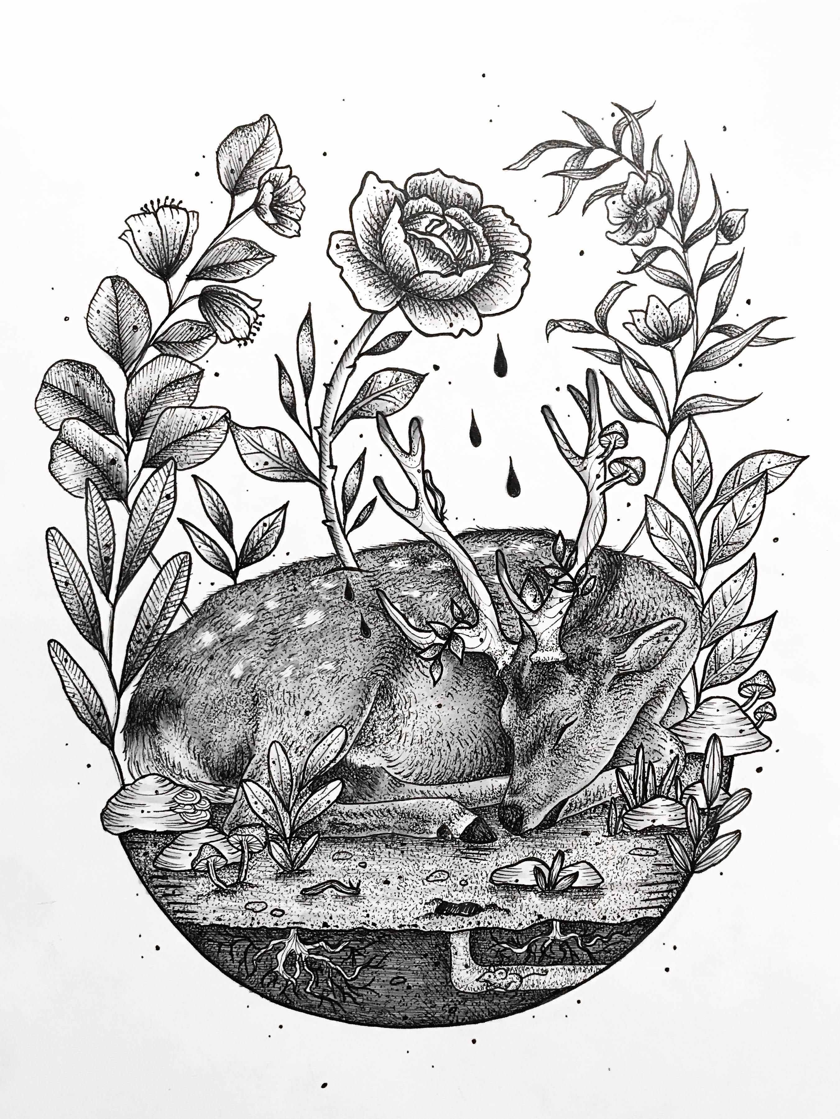 Sleeping deer illustration