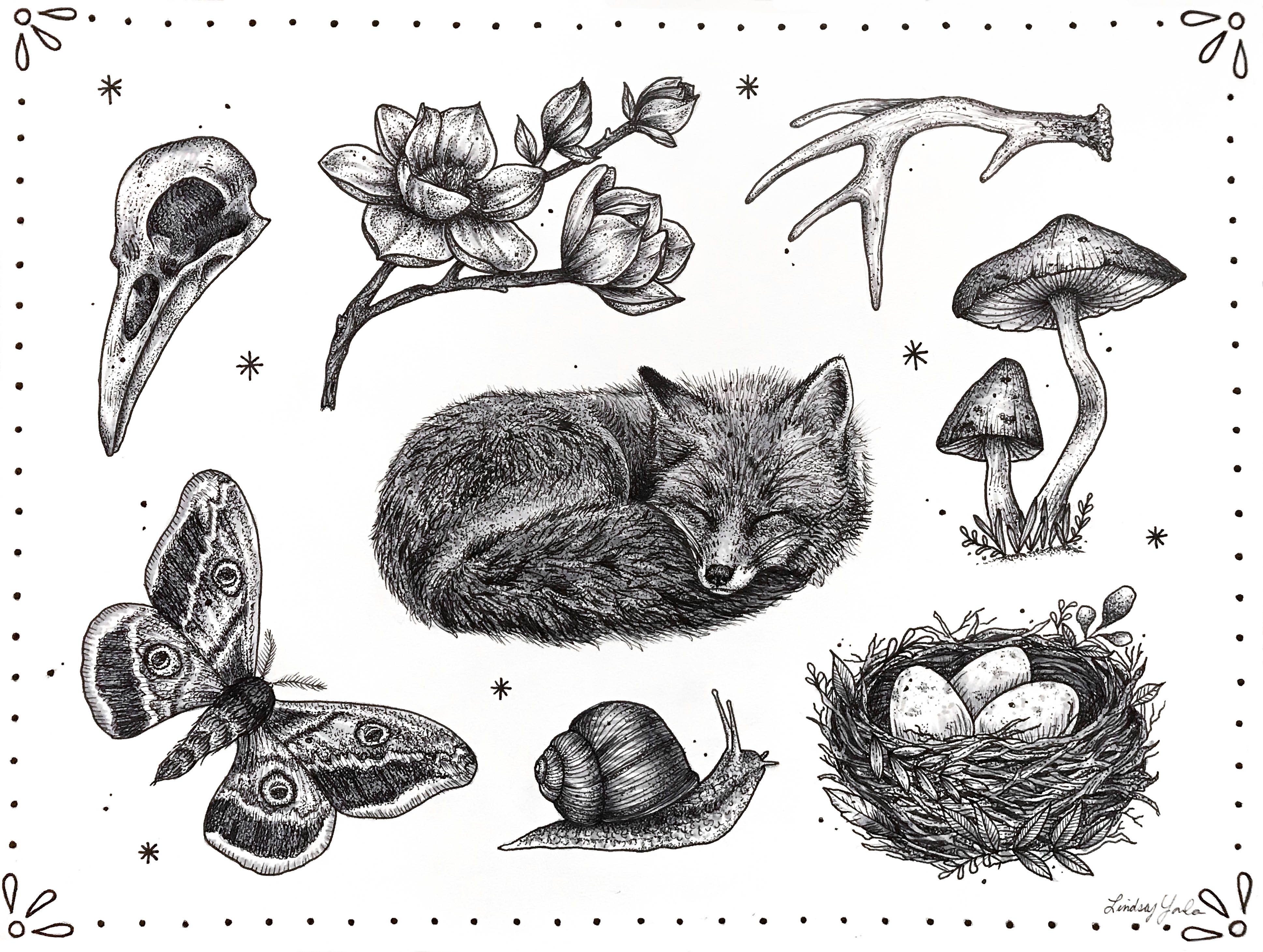 Flash style illustration of various woodland creatures