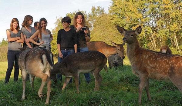 des animaux de la forêt avec des visiteurs de RDV en Terre Animale