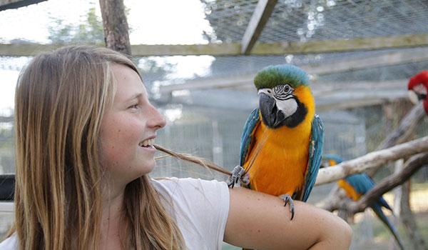 un perroquet sur le bras d'une femme