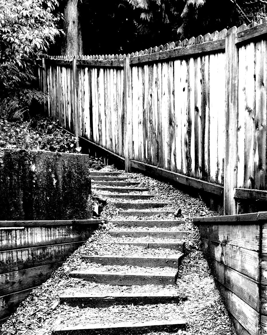 backyard perspective black and white photo