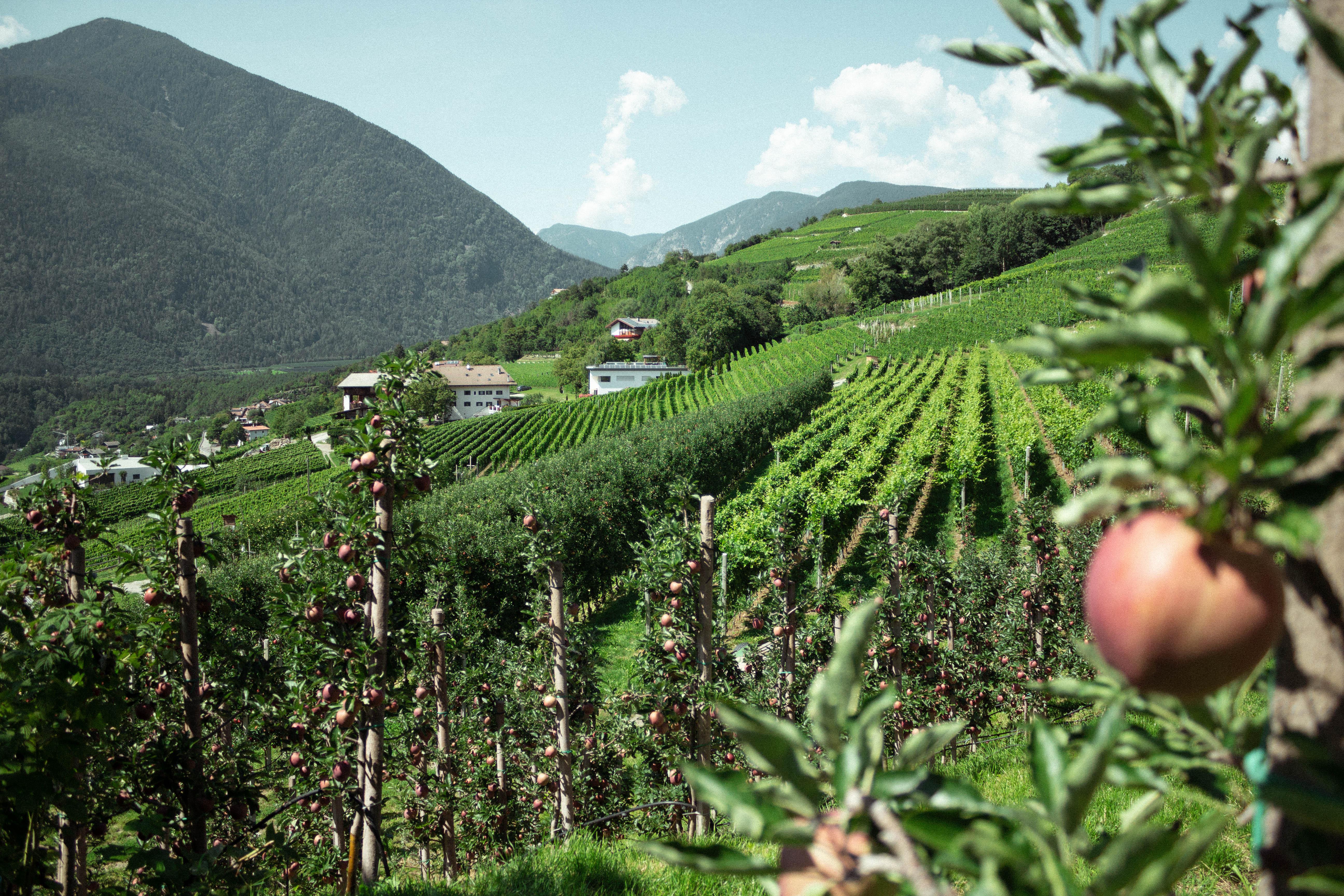 apple-monoculture