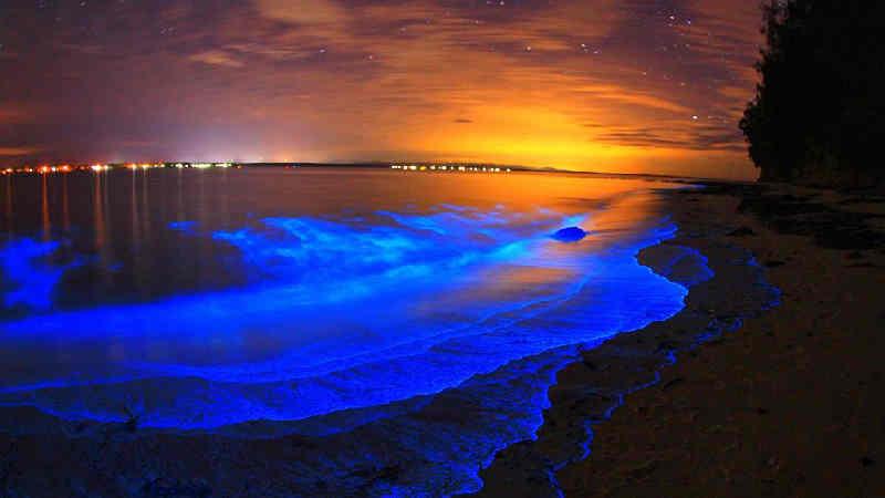 The beautiful bioluminescence on the beach.