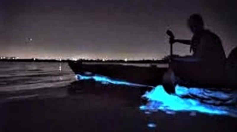 Glowing waters caused by agitating the plankton during bioluminescence season.