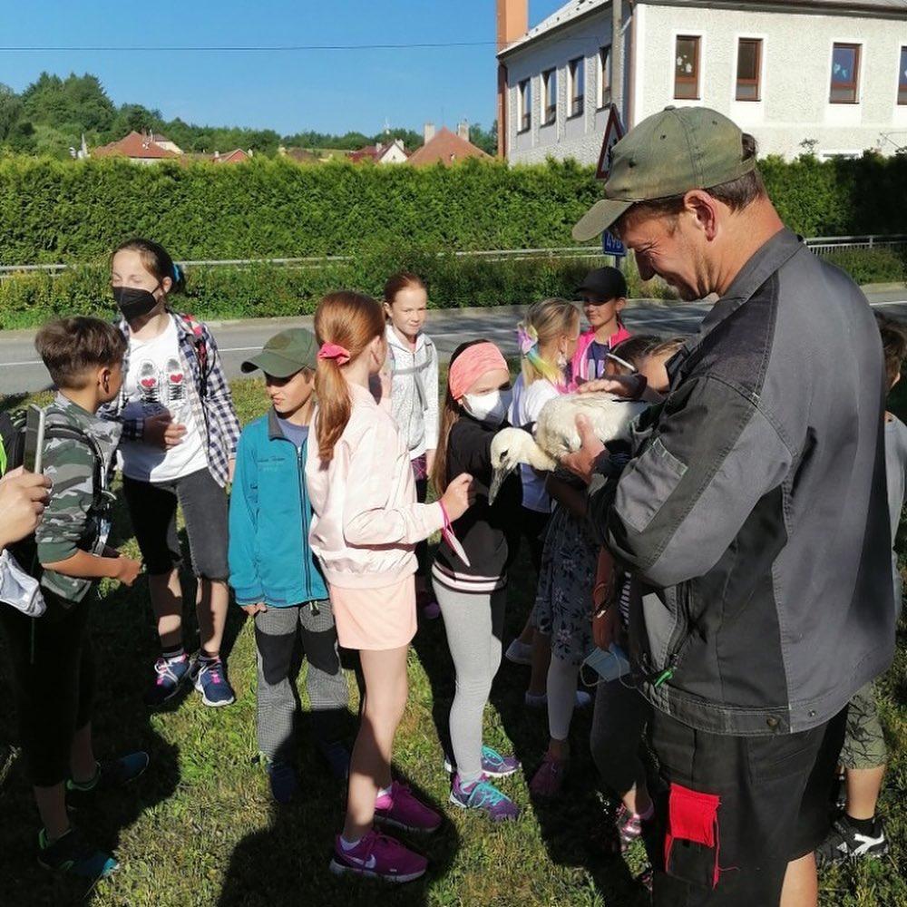 Včera za asistence žáků ZŠ proběhlo označení mladých čápů. Přejme jim hodně zdaru při letech z rodného hnízda.