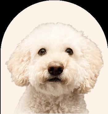 Noodle - Software Archipet