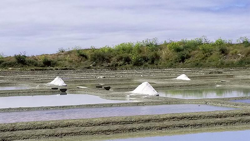 Salt marshes of Guérande in France.