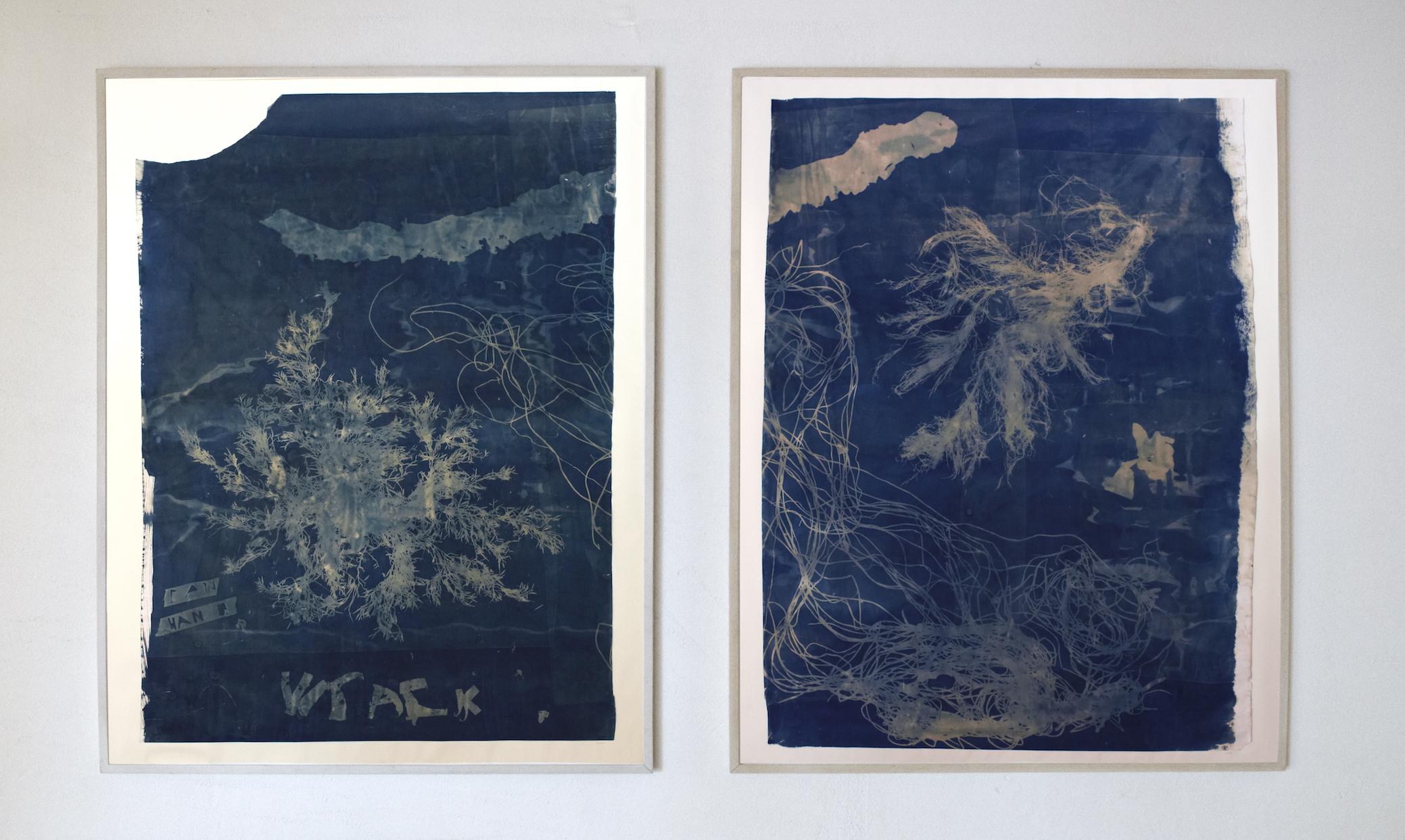 Seaweed Blueprint