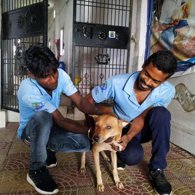 VfA members lovingly petting a rescued dog