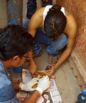 volunteers helping an injured dog