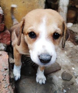 Available puppy for adoption