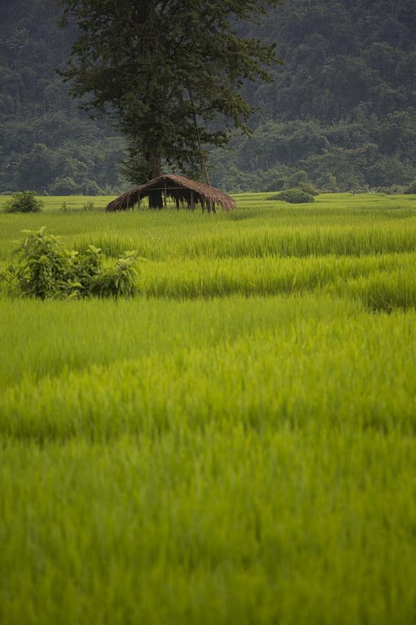 Peren-Nagaland