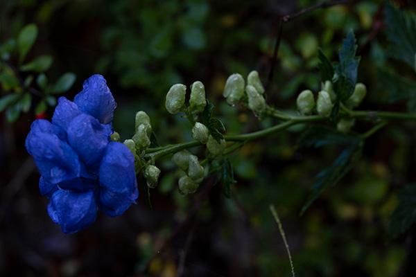 Flower in Huntington Park - Photo Credit: Elyse Shapiro