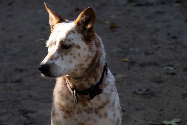 Dog in Sunshine - Photo Credit: Elyse Shapiro