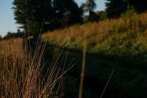 Morning at Huntington Park - Photo Credit: Elyse Shapiro