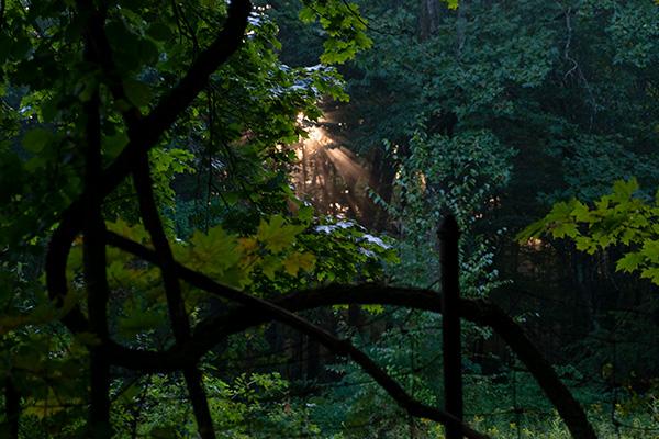 Perspective at Huntington Park - Photo Credit: Elyse Shapiro