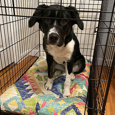 Ask the Vet - When is it safe to leave my puppy home alone out of the crate?