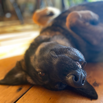Ask The Vet - Why Do Some Dogs Snore?