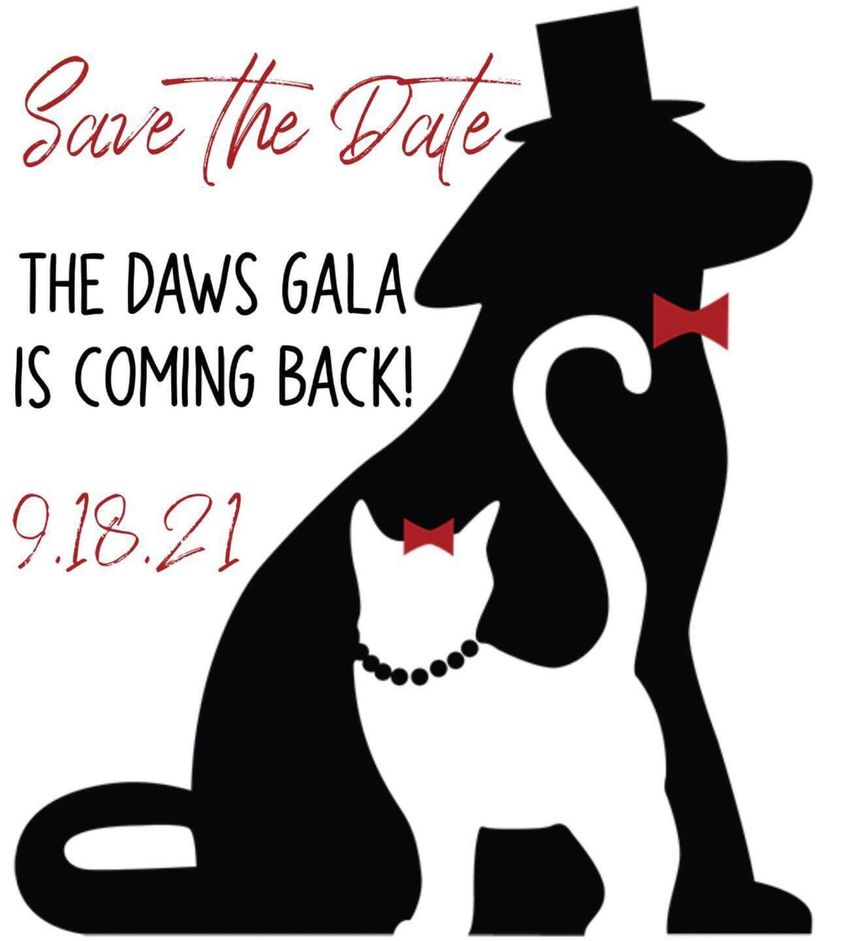 May be an image of cat and text that says 'Save the Date THE DAWS GALA IS COMING BACK! 9.18.21'
