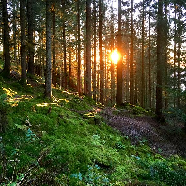 Solen skinner bak trær på Fløyen