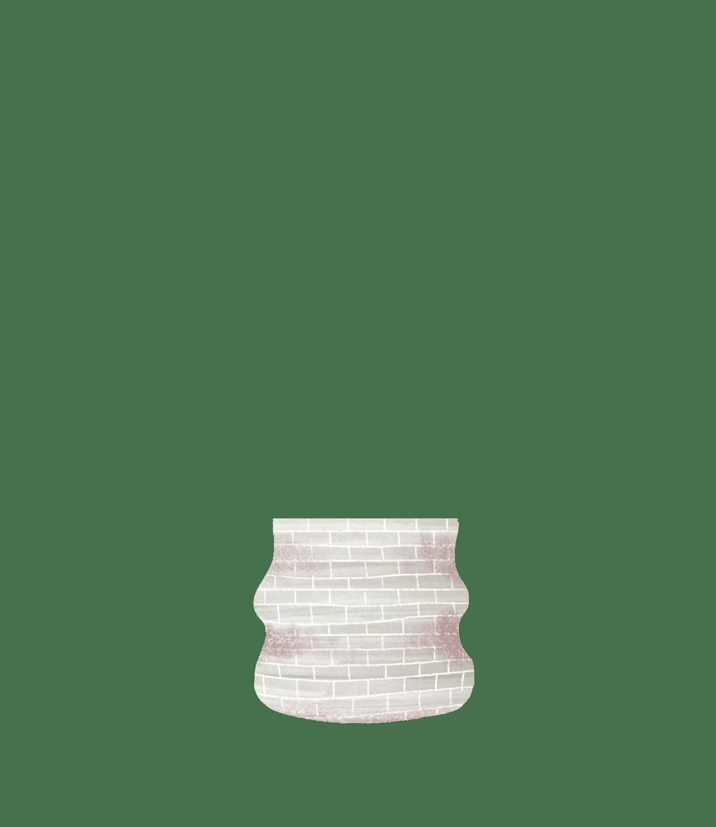 maranta pot