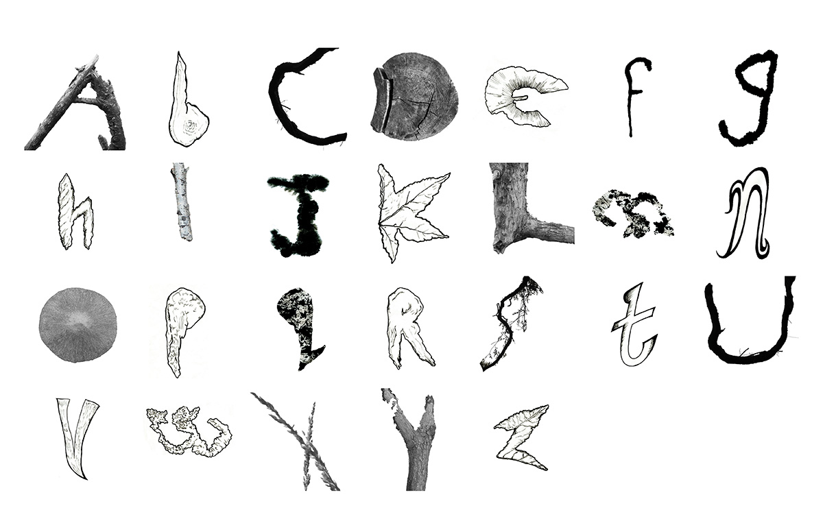Full alphabet in greyscale. Some letters are photographs of natural elements that look like letters. Others are drawn.