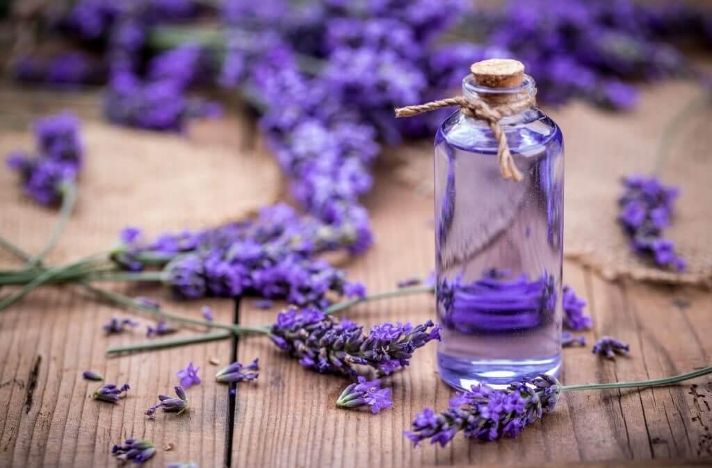Mùi hoa oải hương trong nước hoa kích dục