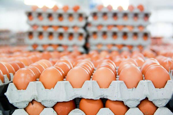 Tại sao nên ăn trứng gà để chống xuất tinh sớm?