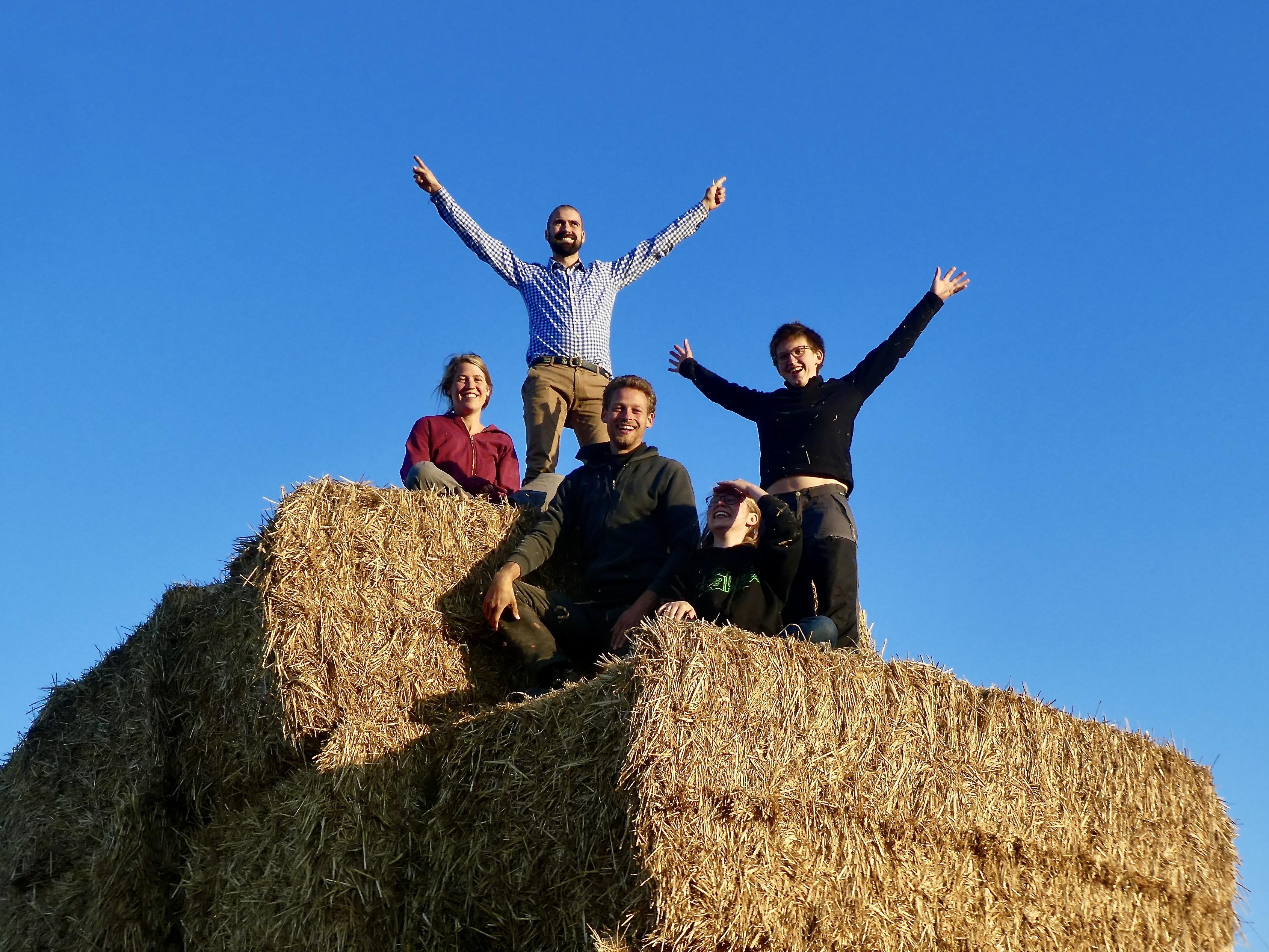 Vier Gründer vom Hof Lebensberg sitzen und stehen auf einem Stapel Heuballen und halten die Arme hoch.