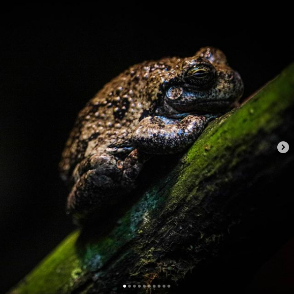 Image of a toad on some grass