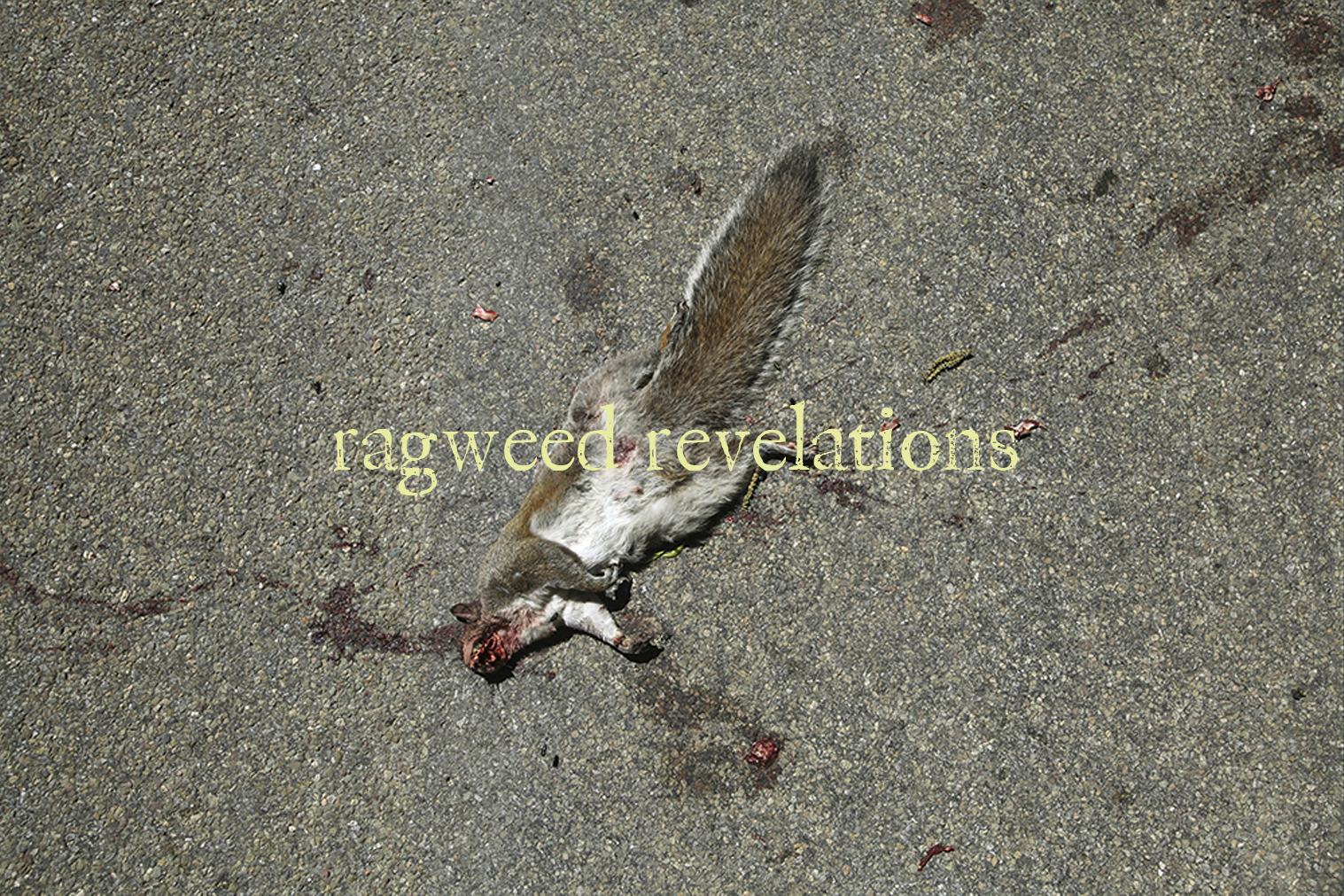 "A photo of a roadkill squirrel with text overlaid ""ragweed revelations"""