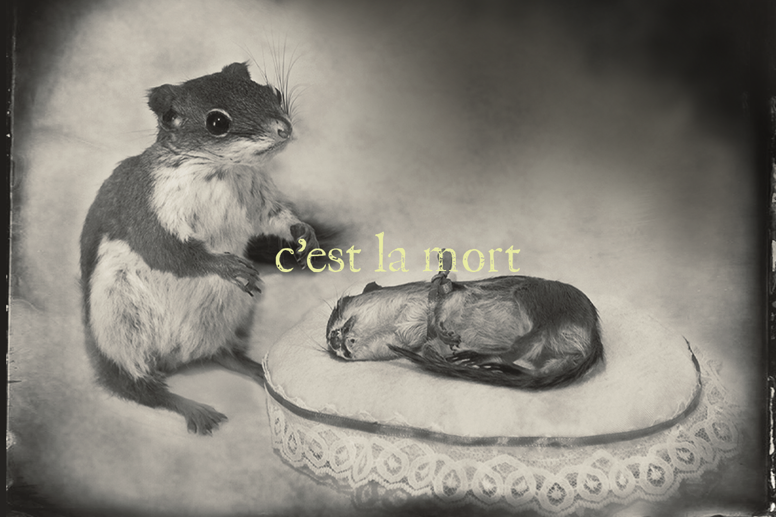 "A photo of a taxidermy squirrel and chipmunk with text overlaiid ""C'est la Mort"""