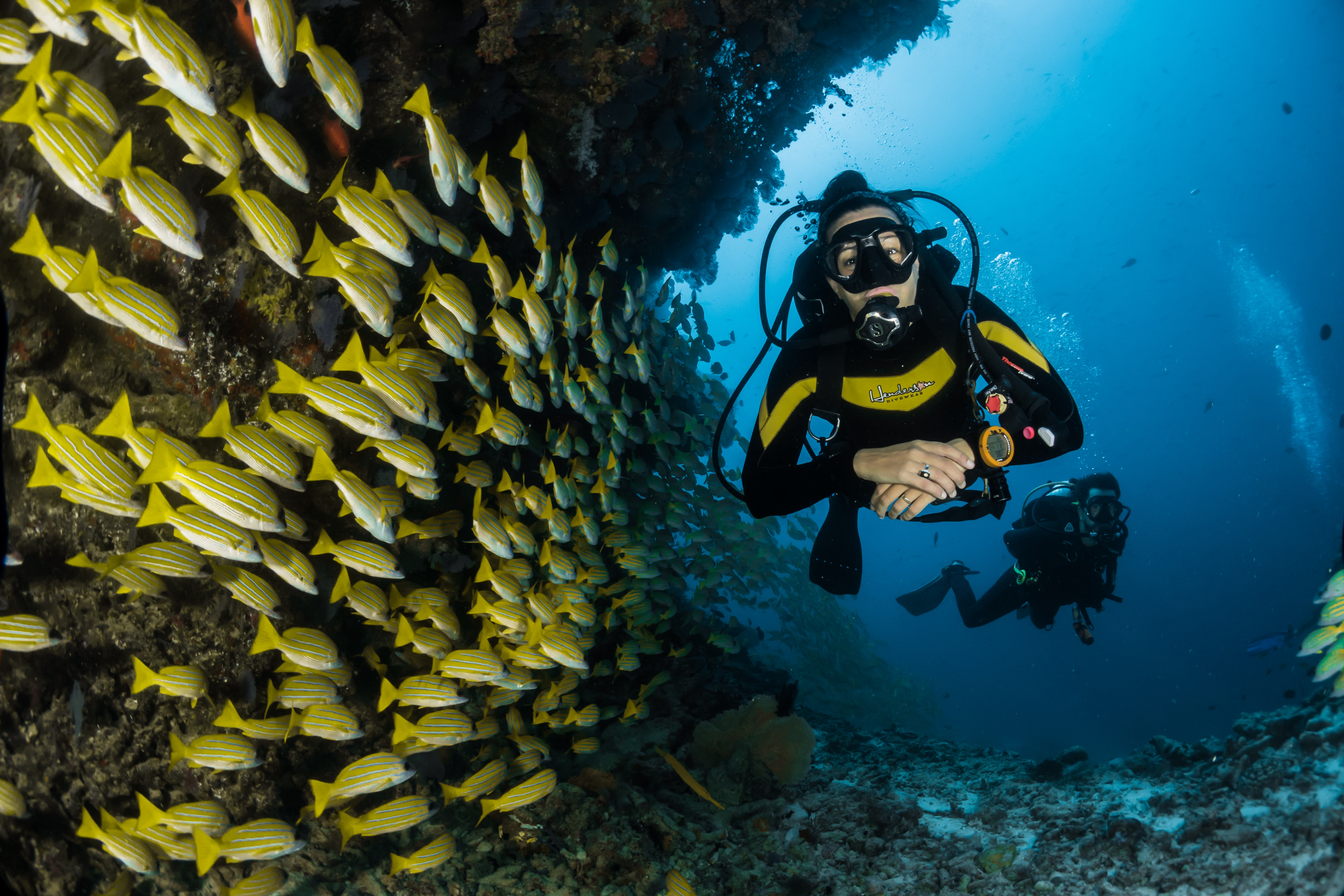 a woman scuba dives with fish after quitting her job