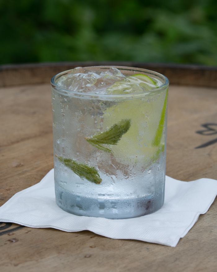 Spruce Tip Gin & Tonic