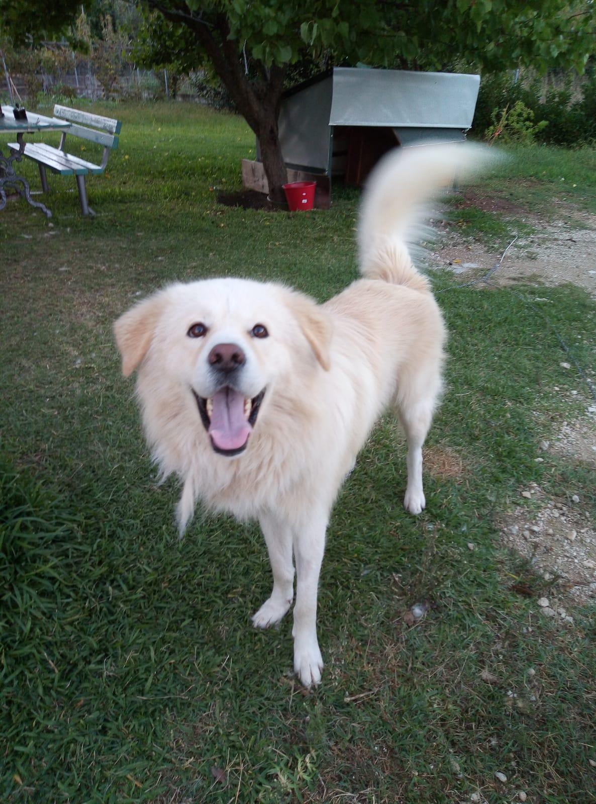 Rescue dog or cat profile picture