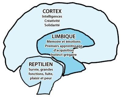 cerveau-influence.jpg