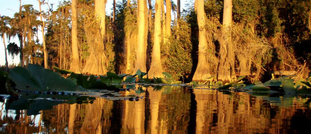 Join us as we travel deep into the most remote areas of the Okefenokee Swamp. On this tour we kayak across open prairies, and view black bears, otters, alligators, and more.
