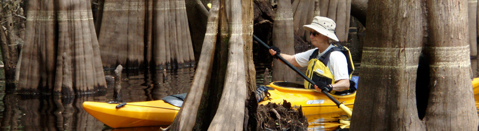 We will explore hardwood swamps, pitcher plant prairies, dark water creeks, and sloughs filled with twisted cypress knees paddling from the Okefenokee Swamp downstream.