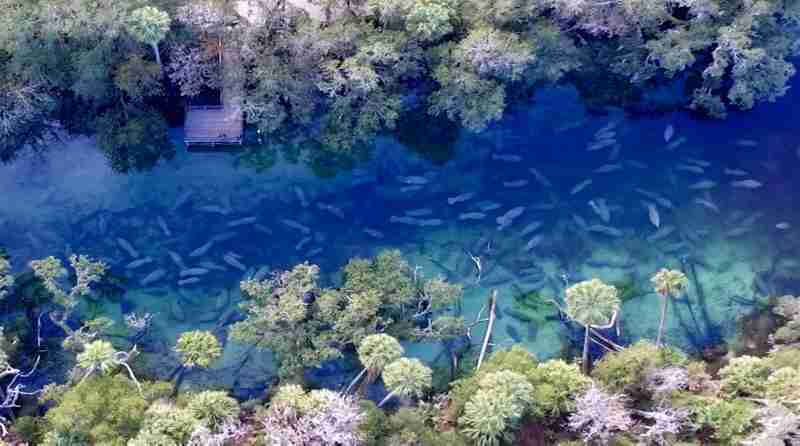 Aerial view of Blue Spring State Park when closed for manatee refuge.