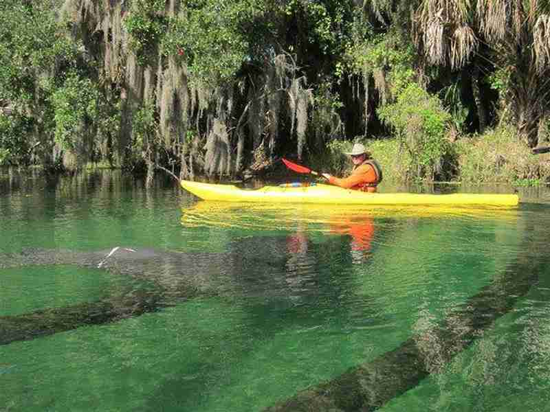Kayakers visiting Blue Spring State Park get a close up view of the manatees.