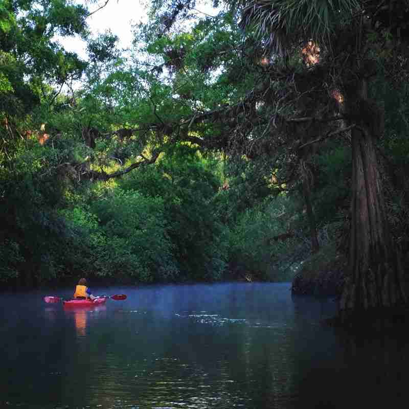 Come paddle the 8 miles through the mysterious, moss-covered cypress forest of the Little Big Econ State Forest.