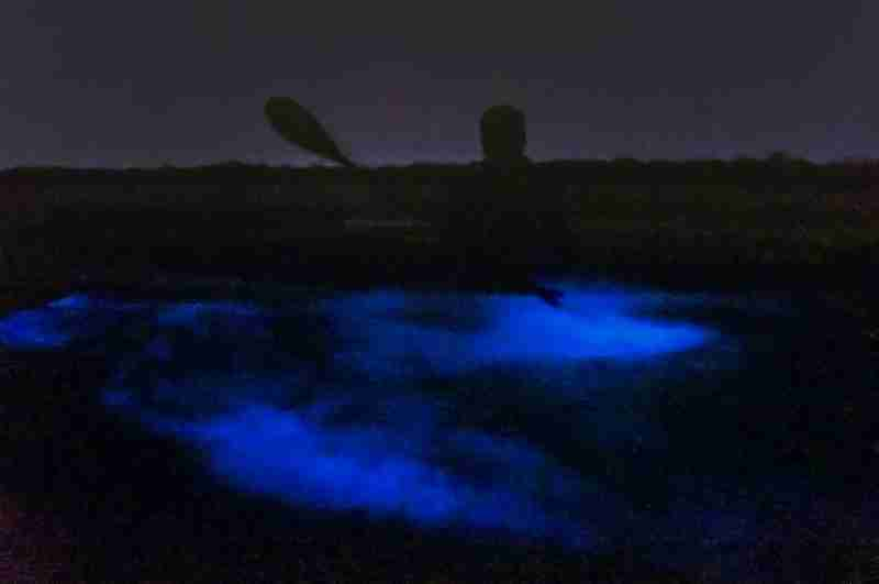 The glowing plankton after being agitated by the kayaks and paddles.